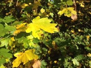 Gesund in den Herbst - Tipps aus der Apotheke